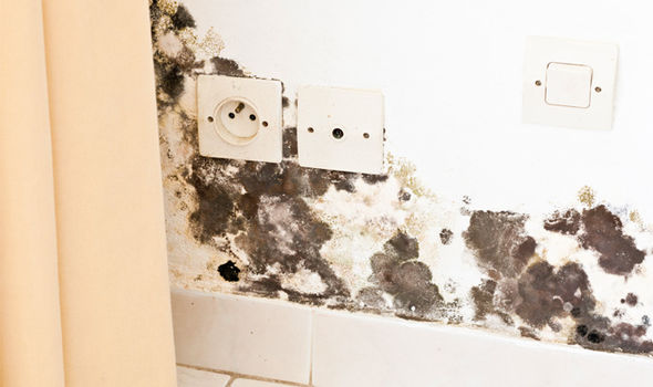 How-to-remove-mould-in-your-home-914048
